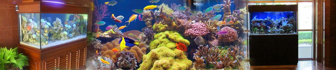 dmc_aquarium