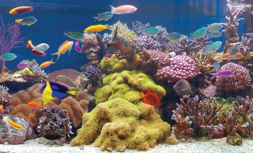 aquarium-laut